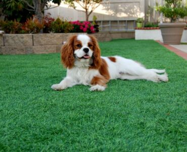 Featured image - 7 Benefits of Installing Artificial Grass for Your Lawn