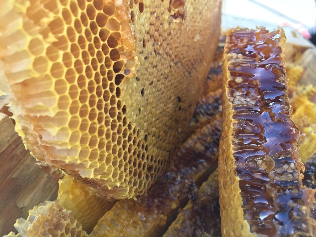 image - Bee Propolis: What it is and Why You Should Include it in Your Immune System Booster Kit