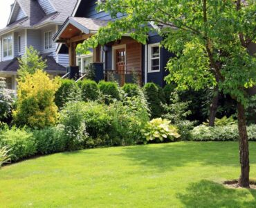 Featured image - 4 Awesome Benefits of Trees for Your Lawn