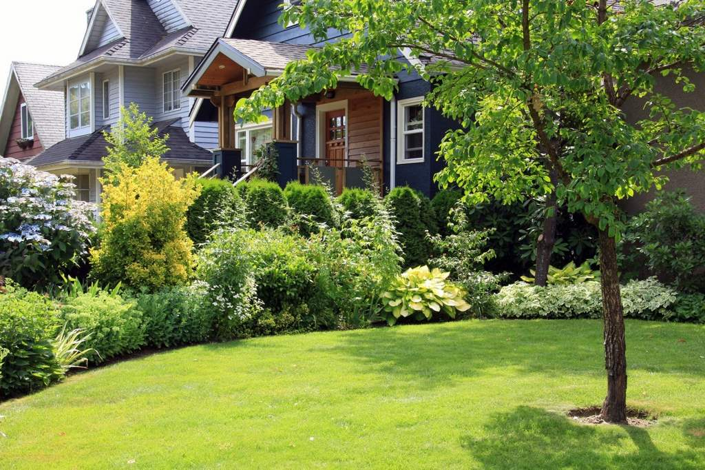 image - 4 Awesome Benefits of Trees for Your Lawn