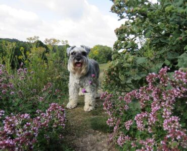 Featured image - How to Landscape Your Dog-Friendly Garden