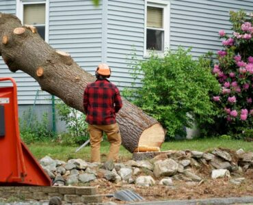 Featured image - How to Remove a Tree From Your Yard: The Key Steps to Take