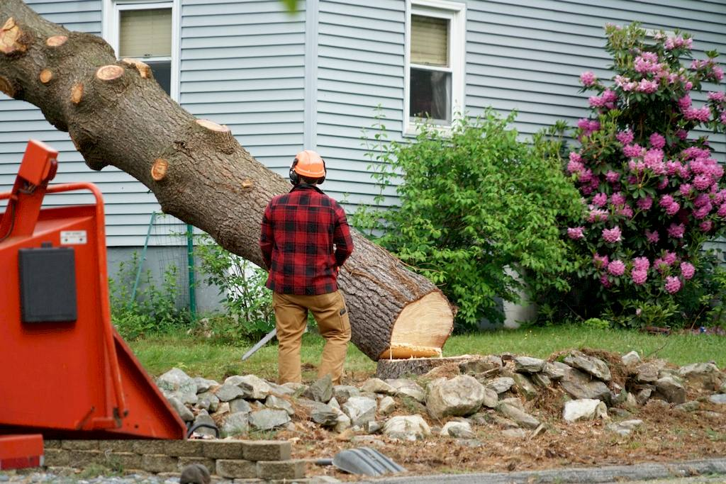 image - How to Remove a Tree From Your Yard: The Key Steps to Take