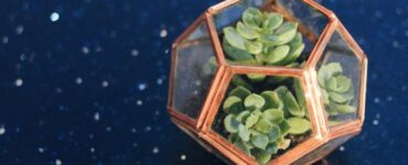 Featured image - The Best Plants To Grow In Your Terrarium