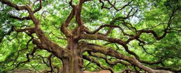 Featured image - The Different Types of Trees You Need to Avoid at All Costs