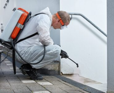Featured image - Things to Consider Before Hiring a Mold Removal Company