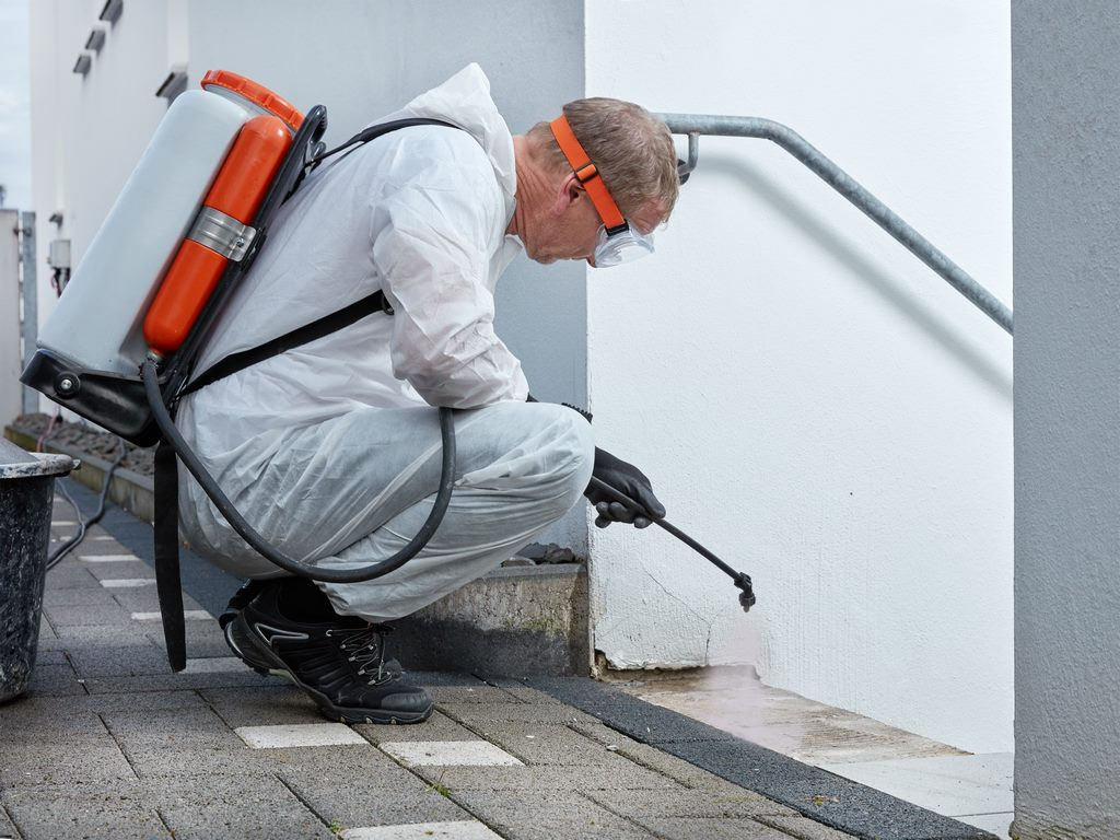 Things to Consider Before Hiring a Mold Removal Company