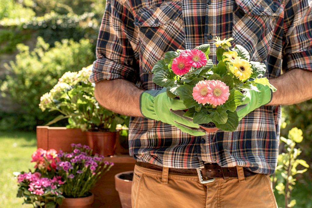 image - Beautiful Blooming Orchard: 4 Essential Tips to Be a Successful DIY Flower Gardener