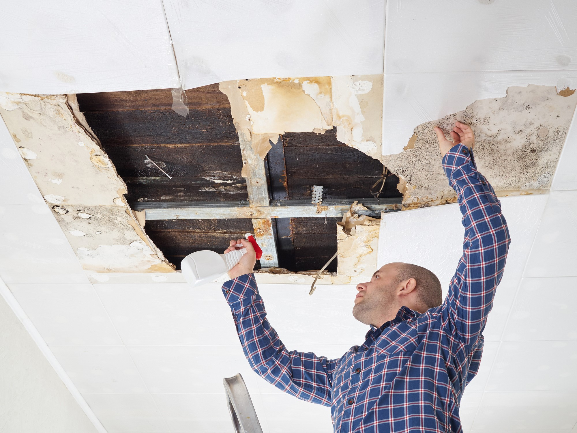 image - 5 Questions to Ask Before Choosing a Mold Removal Company