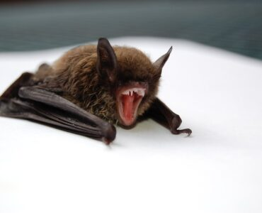 Featured image - 6 Signs You Have a Bat Infestation in Your Home