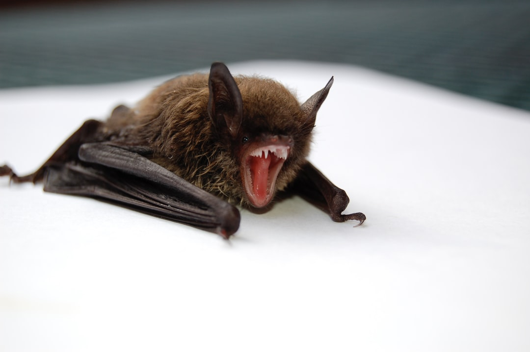 image - 6 Signs You Have a Bat Infestation in Your Home