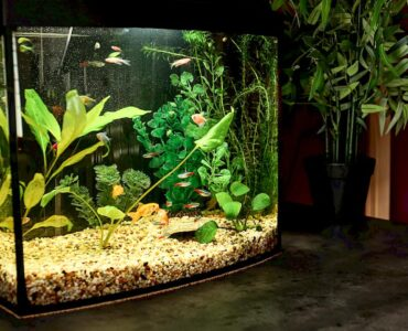 Featured image - How to Choose a Fish Tank to Be Placed Inside Your Home
