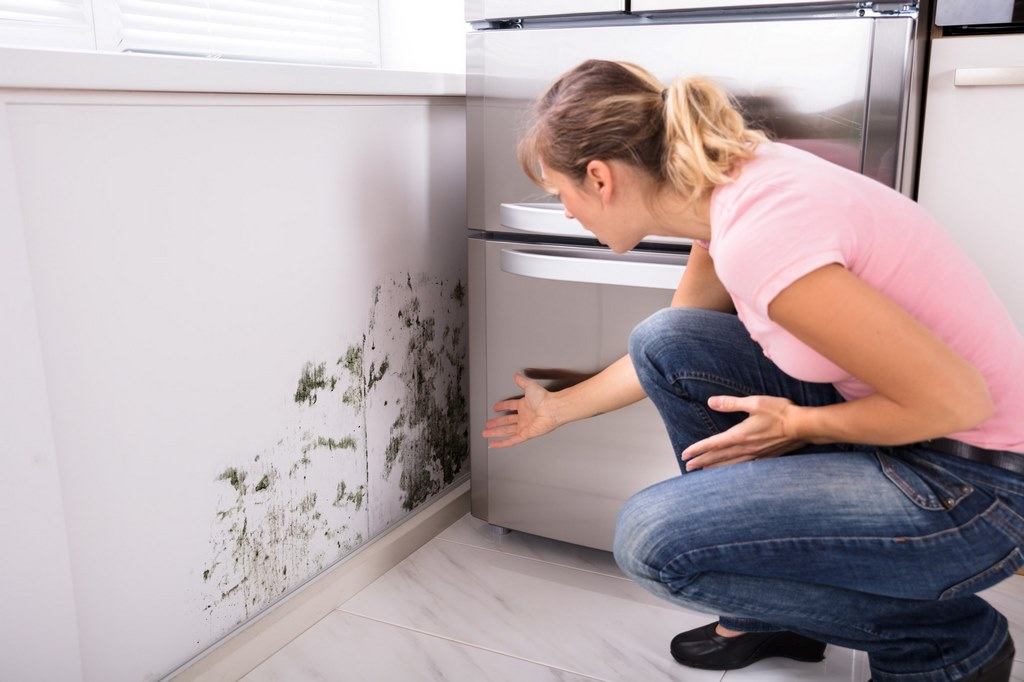 image - Is Your Home a Hazard? 5 Mold Health Risks That You Need to Know