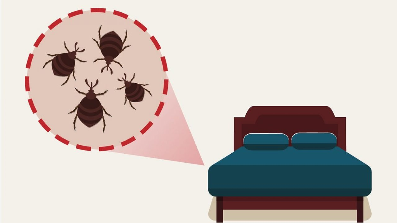 The Best Way to Keep Your House Pest-free