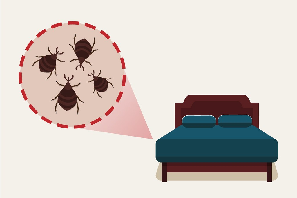 image - The Best Way to Keep Your House Pest-free