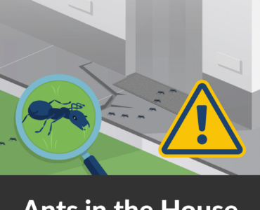 Featured image - 8 Tips for Avoiding Ants in Your House