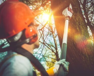 Featured image - 5 Reasons to Look into a Tree Removal Service for Problematic Trees
