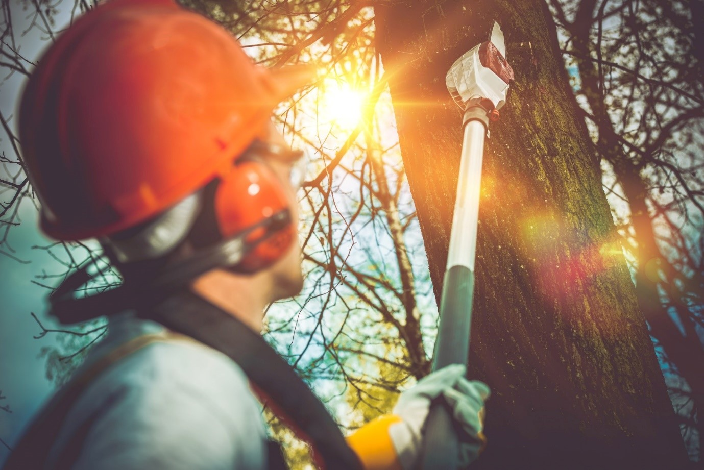 image - 5 Reasons to Look into a Tree Removal Service for Problematic Trees