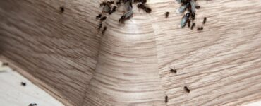 Featured image - Common Household Pests and Why They Should Be Removed from Your Home