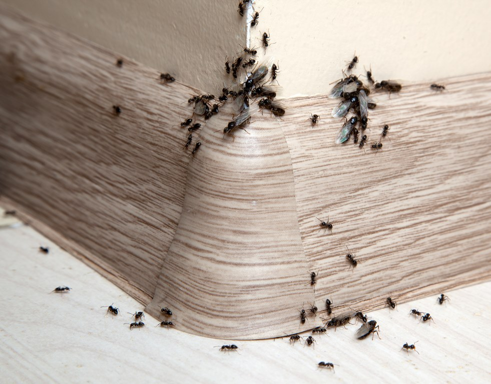 image - Common Household Pests and Why They Should Be Removed from Your Home