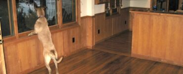 FEatured image - Hardwood Floors vs. Carpet, The Complete Guide