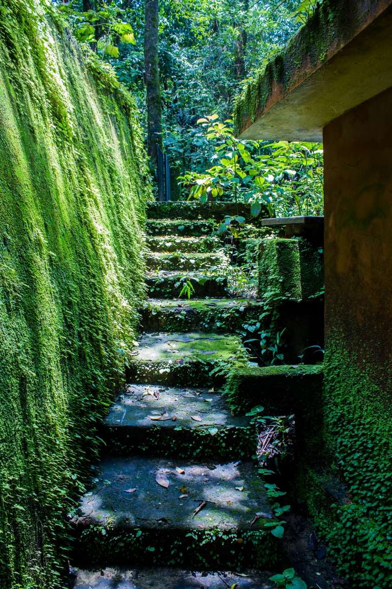 image - 5 Hillside Landscaping Ideas for Rustic Backyards