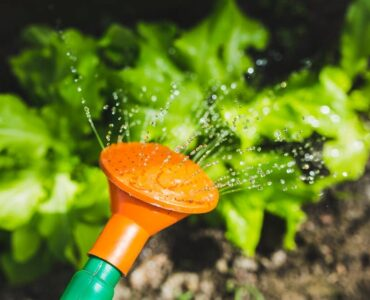 Featured image - How Often Should I Water My Garden? A Simple Guide