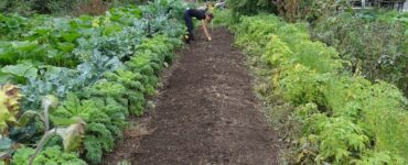 Featured image - How to Dig Your First Vegetable Garden