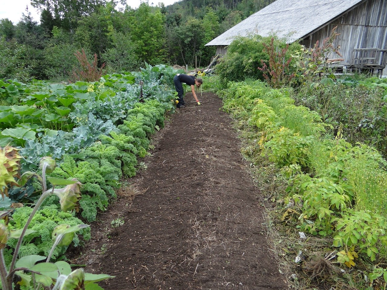 image - How to Dig Your First Vegetable Garden