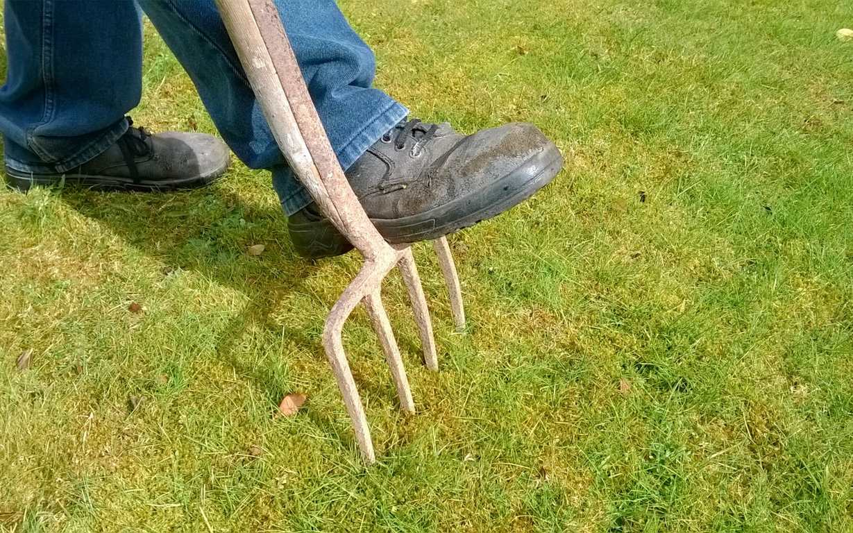 image - What Is Lawn Aeration and How Can It Help Your Garden