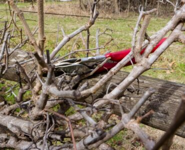 Featured image - Things You Need to Know About Dormant Pruning