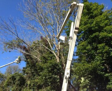 Featured image - How to Trim Really Tall Trees