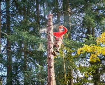 Featured image - 7 Tree Services Every Property Owner Should Consider