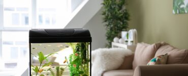 Featured image - 4 Types of Aquariums You Can Install in Your Home