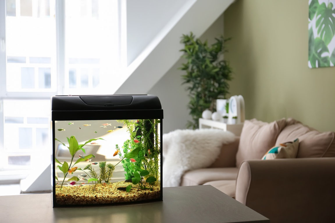 image - 4 Types of Aquariums You Can Install in Your Home
