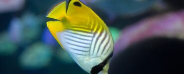 Featured image - Are Tropical Fish Saltwater Fish