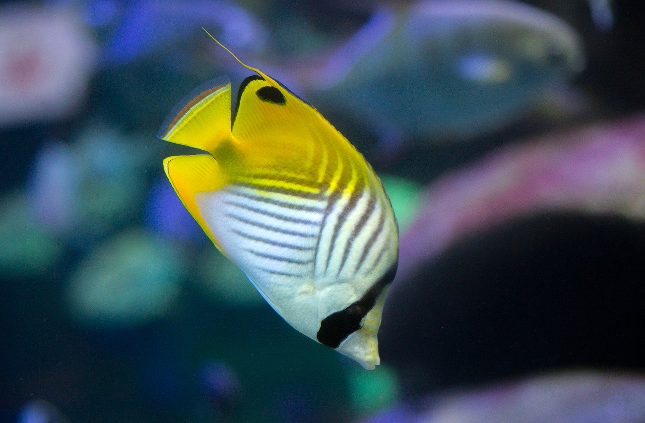 image - Are Tropical Fish Saltwater Fish
