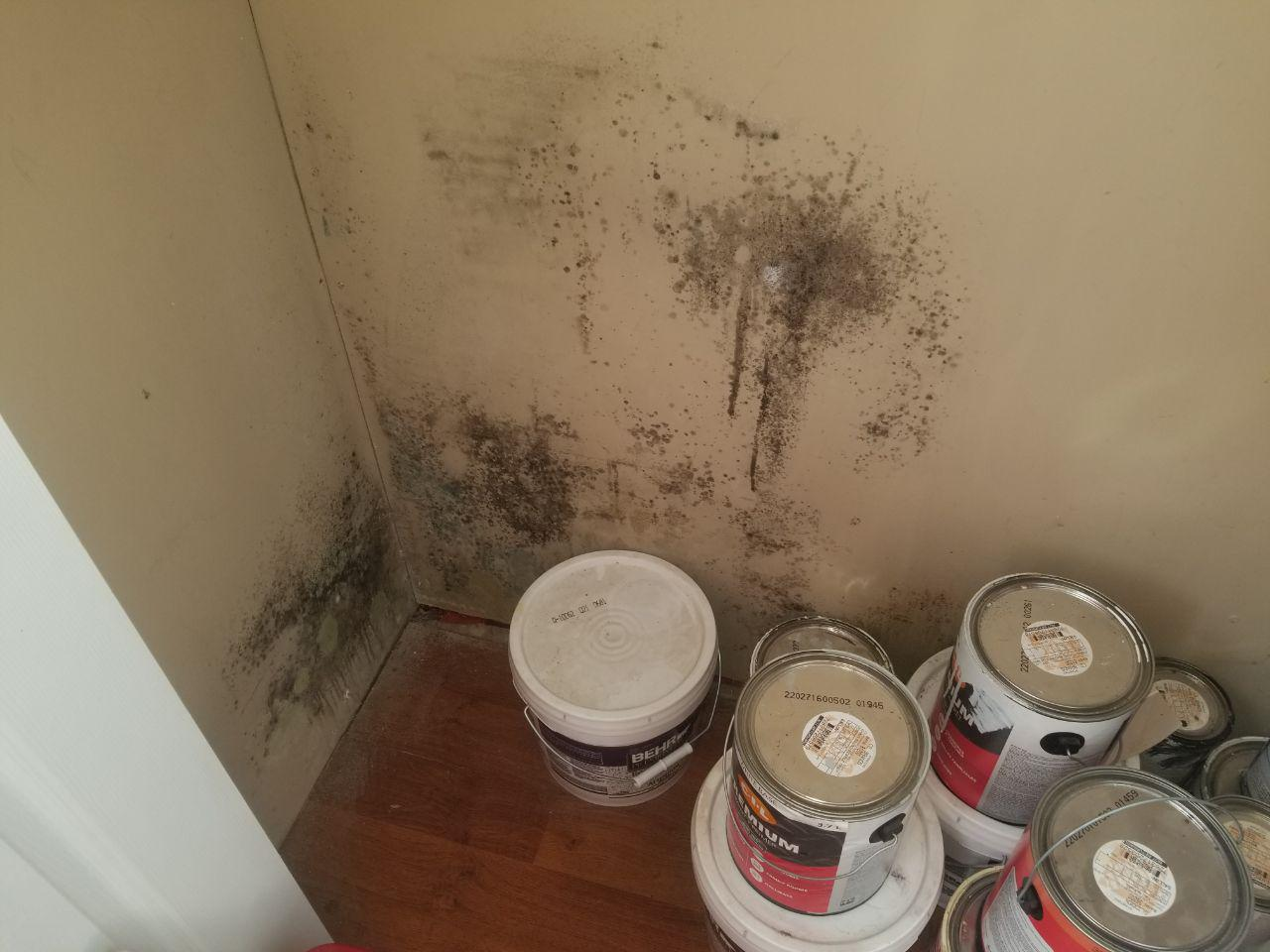 image - Common Hangout Places for Household Mold