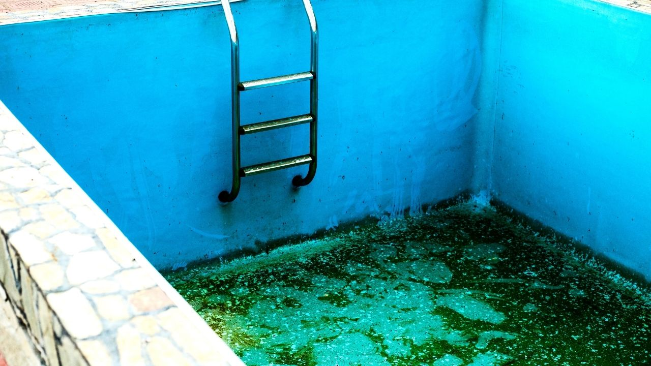 image - How to Clean An Empty Pool With Algae