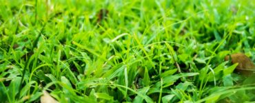 Featured image - How to Get the Perfect Lawn