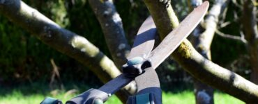 Featured image - How to Prune Shrubs and Trees: A Simple Guide
