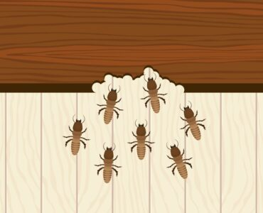 Featured image - Top Tips When Locating & Treating Termites In Your Home