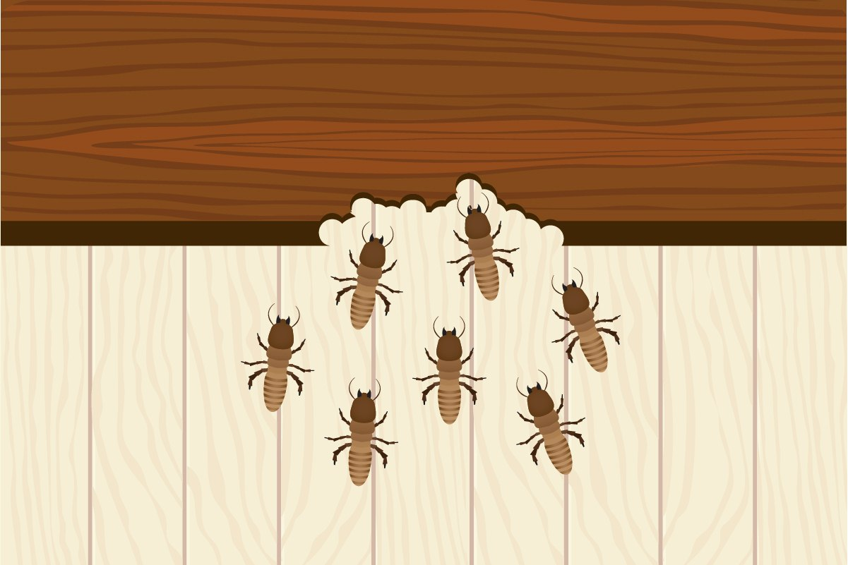 image - Top Tips When Locating & Treating Termites In Your Home