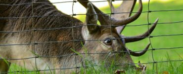 Featured image - The Different Types of Deer Fences for Your Property