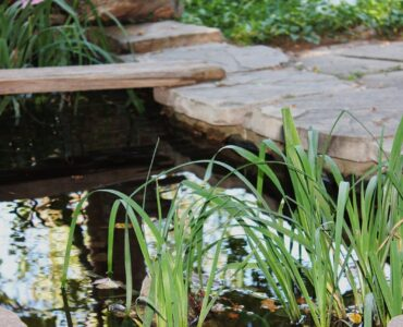 Featured image - Best Water Solutions for Your Garden: Top 5 Flowing and Still Pond Ideas