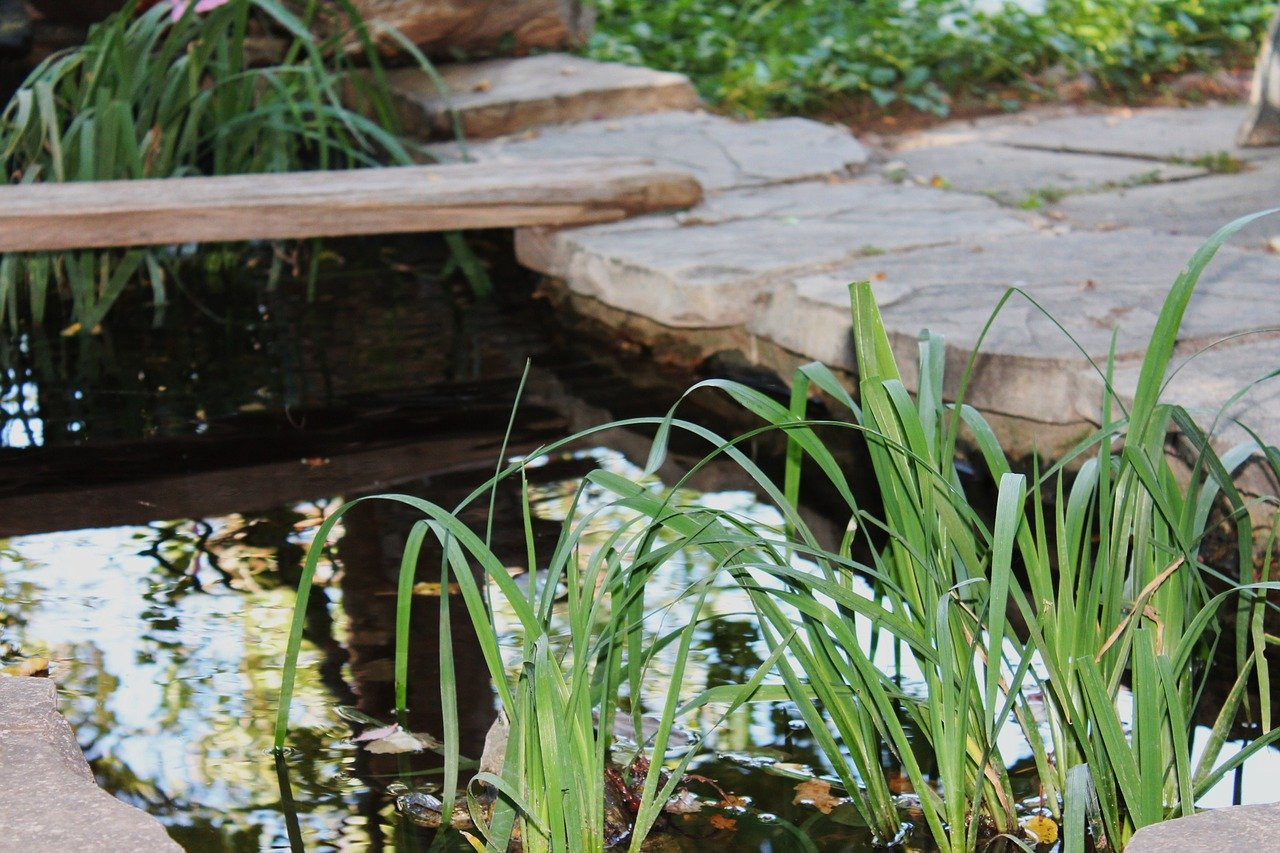 image - Best Water Solutions for Your Garden: Top 5 Flowing and Still Pond Ideas