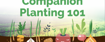 Featured image - A Beginner's Guide to Companion Planting