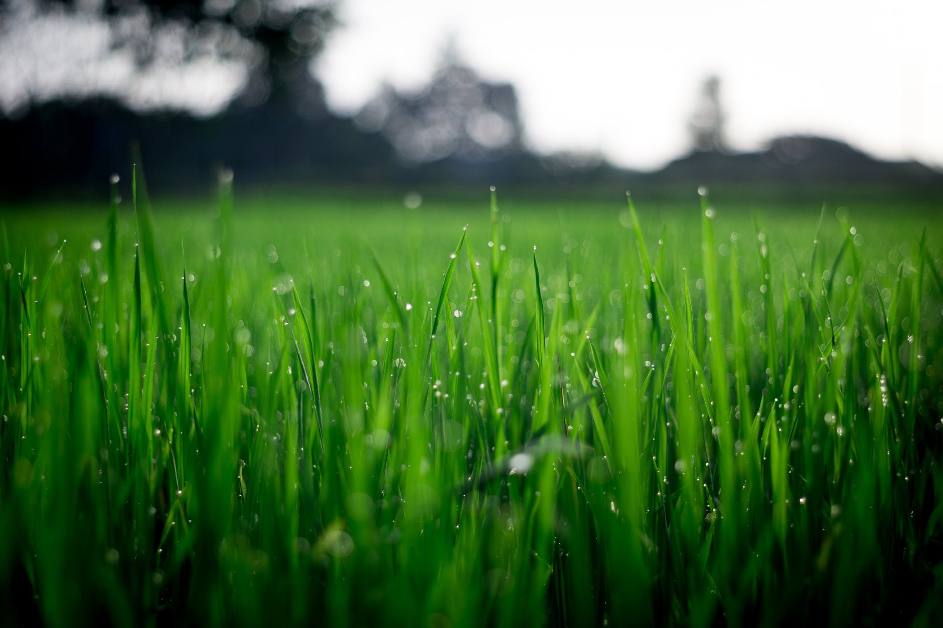 image - Why Do You Need to Save Your Lawn from Weeds and More