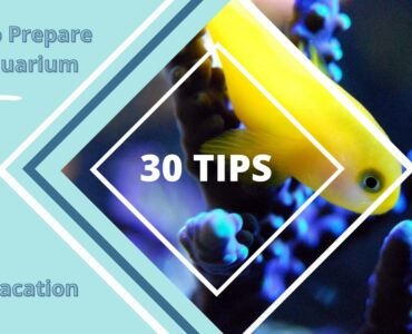 Featured image - How to Prepare an Aquarium for a Vacation- 30 Great Tips