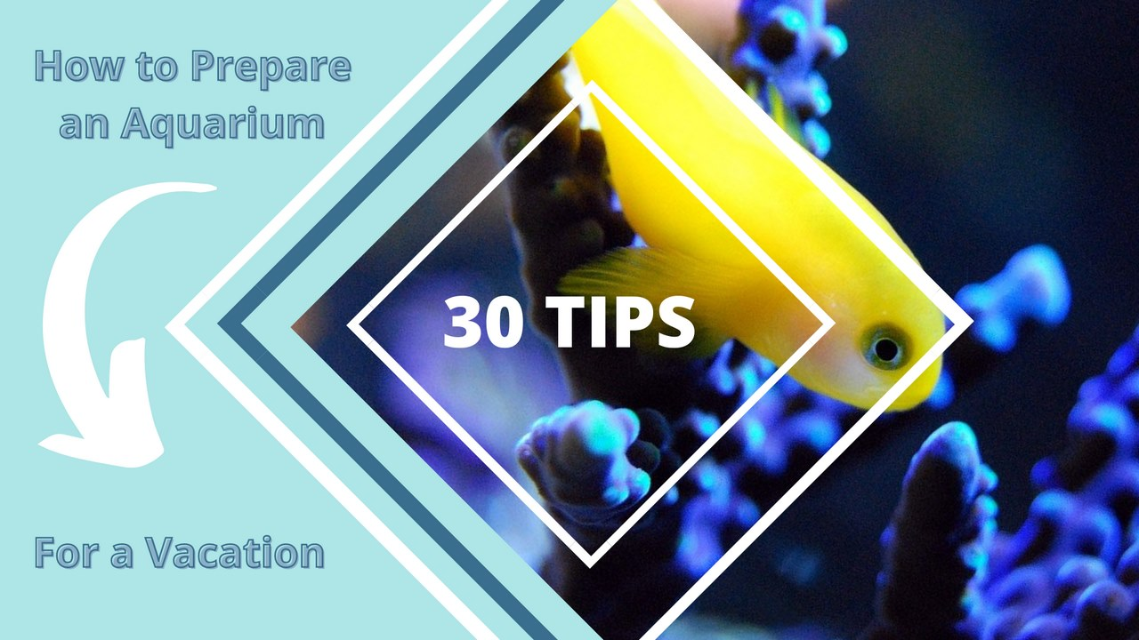 image - How to Prepare an Aquarium for a Vacation- 30 Great Tips